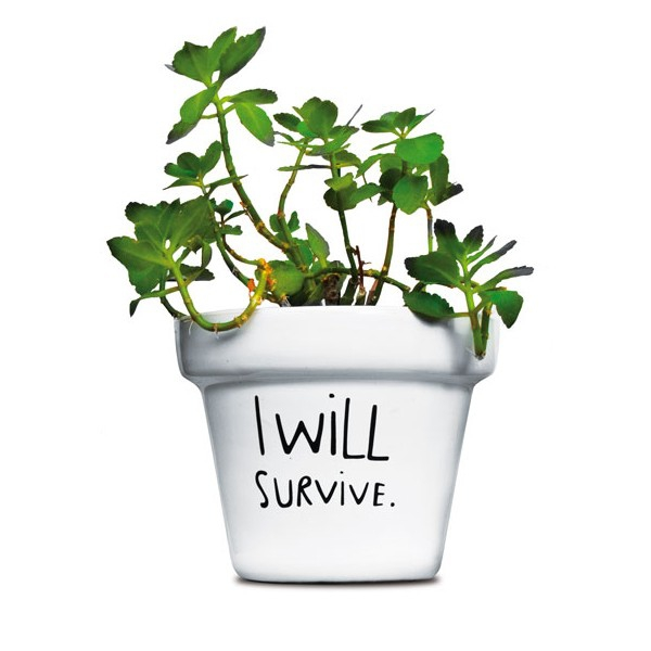 pot-de-fleurs-i-will-survive.73053