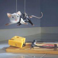 Trois histoires de souris
