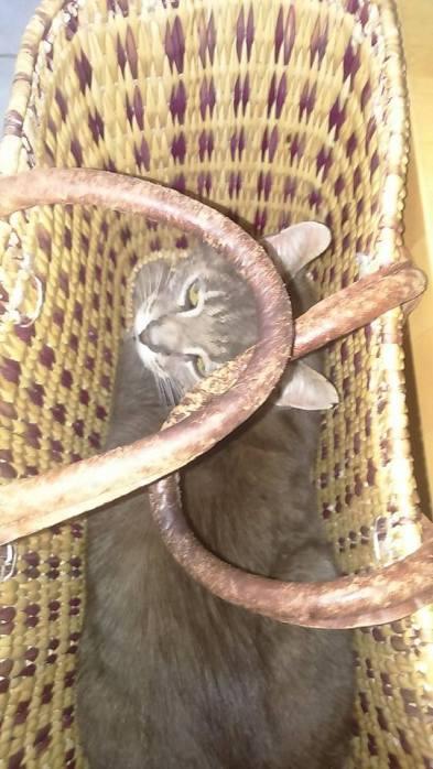 chat dans panier