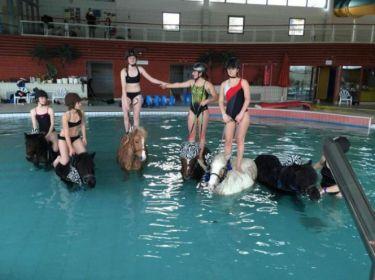 de-l-aquaponey-dans-une-piscine-du-calvados-