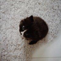 Il parait que les petits chats sont très mignons