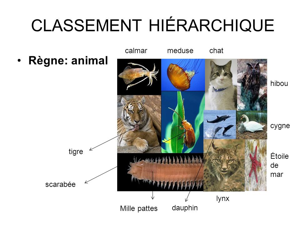 CLASSEMENT+HIÉRARCHIQUE.jpg